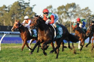 Portelli Hopeful of Improved Track for 2014 Doomben 10,000