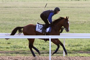 Melbourne Autumn Racing Carnival Featured Horses: Seaburge