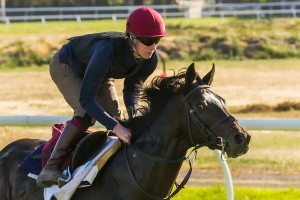 Adelaide is unlikely to run in the George Ryder Stakes this Saturday.