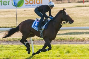 Protectionist will carry the lightest weight of his career in the Melbourne Cup.