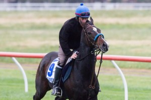 Simenon's 2014 Melbourne Cup Bid in Doubt