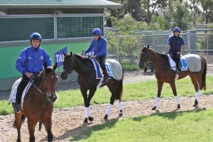 Elhaame (left), Secret Number (centre), Sky Hunter (right)