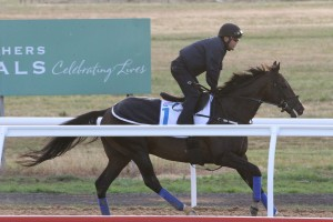 Japanese entrant Fame Game stands to do the most damage in 2015 Melbourne Cup betting markets with bookmakers. Photo: Ultimate Racing Photos