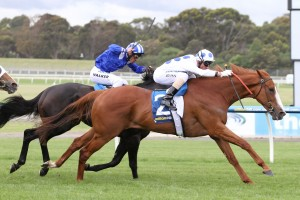 Charmed Harmony beat a talented field to the line in the Sandown Stakes. Photo: Ultimate Racing Photos