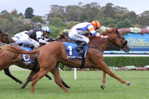 Jackson was too good in the late stages of the Merson Cooper Stakes. Photo: Ultimate Racing Photos