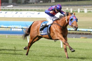 Mahuta is chasing a fifth straight victory in the 2016 Magic Millions Guineas at the Gold Coast on Saturday. Photo by: Ultimate Racing Photos