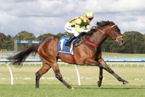 Solicit will return to racing a picture of health in Saturday's Group 2 Expressway Stakes. Photo: Ultimate Racing Photos