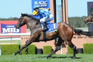 Unencumbered is betting favourite for the 2014 Magic Millions 2YO Classic.