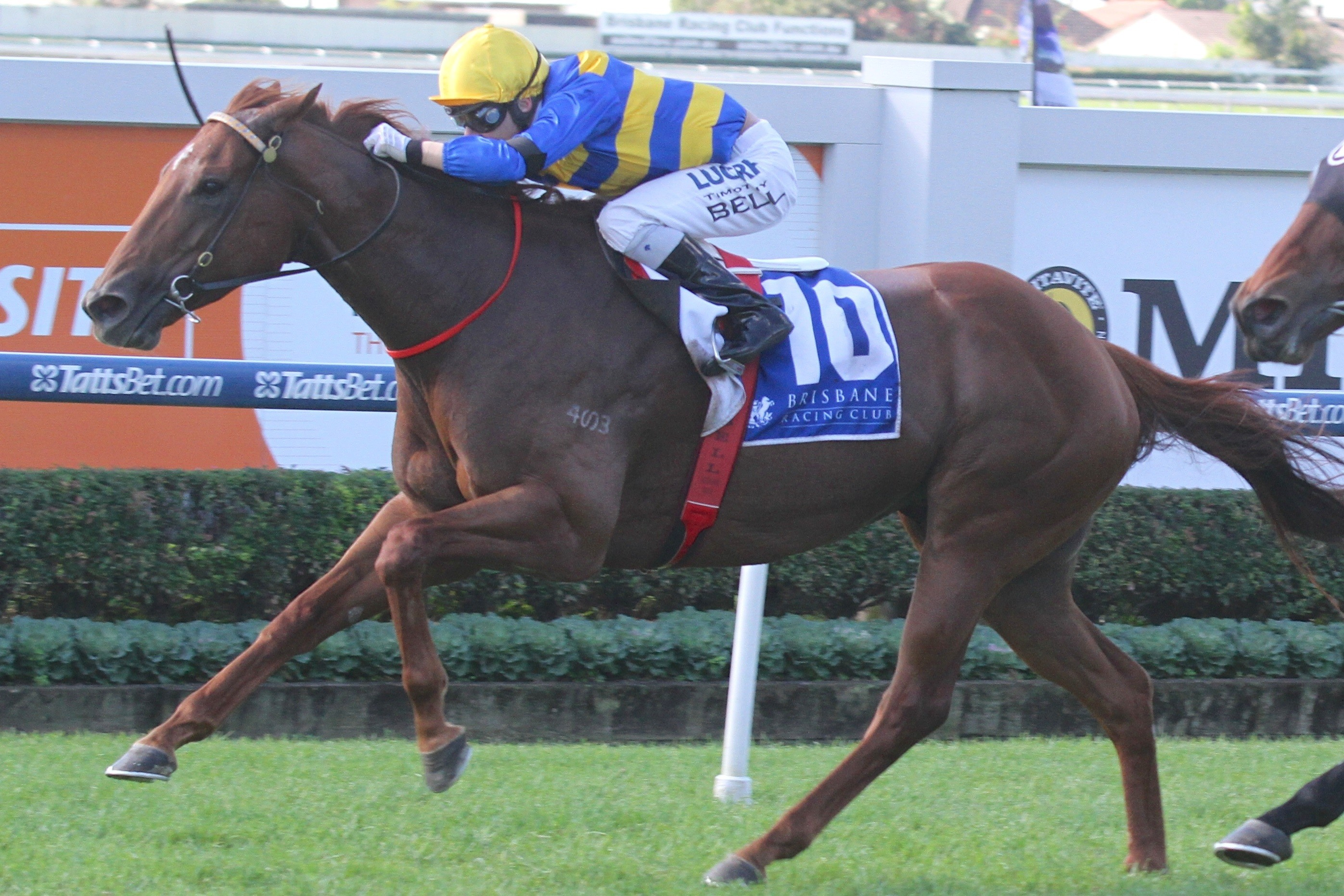 Angel Of Mercy seizes a thrilling victory in the 2014 Lord Mayor's Cup. Photo by: Daniel Costello.
