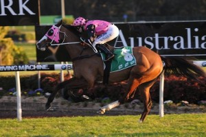 Foreign Prince will be set for the 2016 Grafton Cup. Photo: Steve Hart