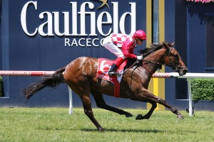 Catchy, above, is among the list of first acceptances for the 2017 Thousand Guineas at Caulfield. Photo by Ultimate Racing Photos.