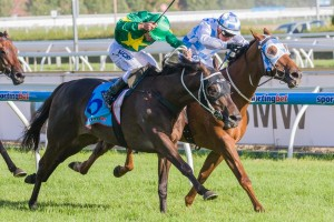 Instrumentalist has been confirmed in the 2015 Sydney Winter Stakes final field. Photo: Race Horse Photos Australia