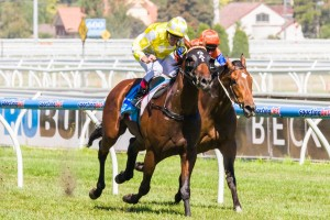 Bull Point is amongst a list of leading conteders for the 2014 Doncaster Mile during The Championships