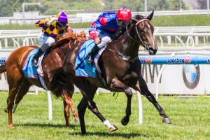 Nayeli will be aiming to secure a position in the 2014 Golden Rose this campaign