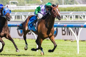 Prince Of Penzance will be chasing his second straight win when he runs in the Mornington Cup this Wednesday.