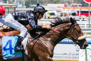 Scratchy Bottom is favourite in 2015 Chairman's Handicap betting markets. Photo: Race Horse Photos Australia