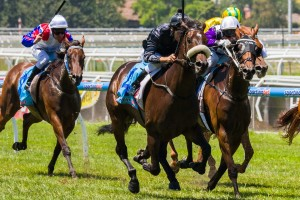 Scratchy Bottom has been confirmed for the 2014 South Australian Derby