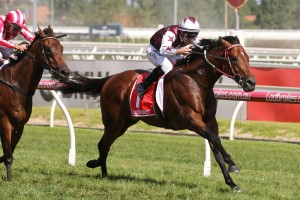 Brad Rawiller will ride Cliff's Edge, above, in the CS Hayes Stakes at Flemington. Photo by Ultimate Racing Photos.