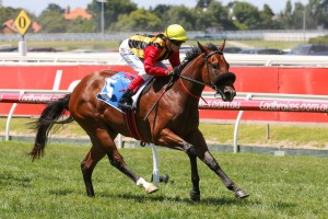 Craig Williams will ride Kinky Boom, above, in the 2018 Ladbrokes Blue Diamond Stakes at Caulfield. Photo by Ultimate Racing Photos.