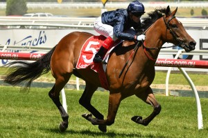 Formality, above, has drawn a wide barrier in the Golden Rose at Rosehill. Photo by Ultimate Racing Photos.
