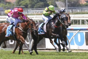 Spirits Dance and Marianne currently lead betting markets for the 2014 Angus Armanasco Stakes
