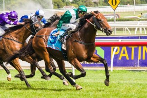Aberro is by prominent sire All Too Hard (pictured). Photo: Race Horse Photos Australia