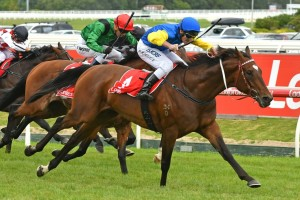 Black Heart Bart, above,  will strip fit and well in the Kingston Town Classic at Ascot. Photo by Ultimate Racing Photos.