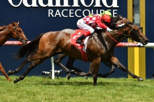 Race favourite Catchy has drawn into the Ladbrokes Blue Diamond Stakes field in barrier 13. Photo: Ultimate Racing Photos