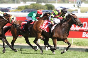Suavito is the Races.com.au tip to win Saturday's Group 2 PB Lawrence Stakes at Caulfield. Photo: Ultimate Racing Photos