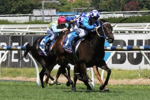 Favourite Fontiton will leave from the rails draw in the 2015 Blue Diamond Stakes. Photo: Adrienne Bicknell