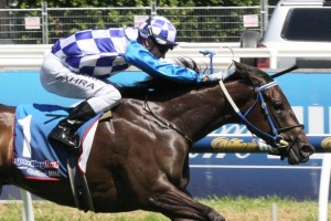 Smart filly Fontiton will return to racing in Friday's Group 1 Moir Stakes at Moonee Valley. Photo: Adrienne Bicknell