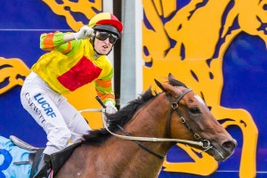 Lankan Rupee is equal favourite in 2014 Newmarket Handicap betting markets along with stablemate Samaready and last year's winner Shamexpress.