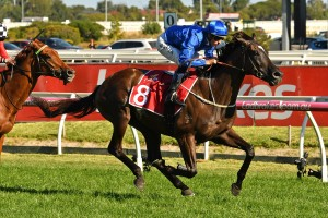 Avilius, above, scores an effortless win in the Peter Young Stakes at Caulfield. Photo by Ultimate Racing Photos.
