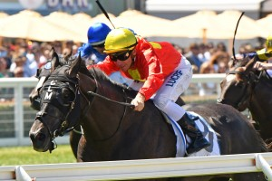 Global Exchange, above, has drawn a midfield barrier in the 2019 Australian Derby at Randwick. Photo by Ultimate Racing Photos.