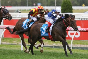 Brave Smash claimed a maiden Group 1 win in the Futurity Stakes. Photo by: Ultimate Racing Photos