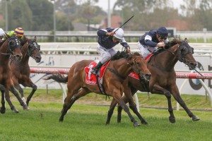 Homesman, above with blue cap, beats stablemate Almandin, white cap, in the Mornington Cup Prelude at Caulfield. Photo by Ultimate Racing Photos.