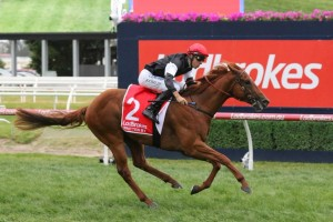 Wrritten By, above, is an acceptor in the Pago Pago Stakes at Rosehill. Photo by Ultimate Racing Photos.