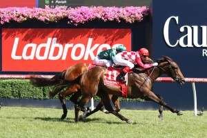 Catchy is the Races.com.au tip to win Saturday's Group 3 Quezette Stakes at Caulfield. Photo: Ultimate Racing Photos