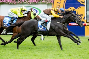 Alpine Eagle may not be seen at the races during the Autumn Racing Carnival. Photo by: Sarah Ebbett