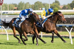 Group 1 Blue Diamond Stakes first and second Pride of Dubai (inside) and Reemah (outside) feature in the Sires Produce Stakes first acceptances.
