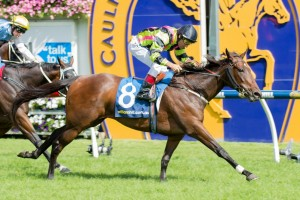 Suavito will be set for a race like the Group 1 Doncaster Mile upon resuming this year. Photo: Sarah Ebbett