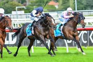 Jet Away is a chance of contesting the 2014 Cox Plate during the 2014 Spring Racing Carnival.