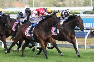 Watermans Bay Too Good in 2015 AJ Scahill Stakes