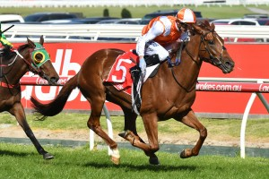 2017 South Australian Derby Betting Preview  & Tips