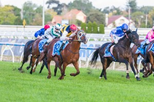 Faust will have to overcome the likes of Niblick (centre) if to claim success in the 2014 Wagga Cup
