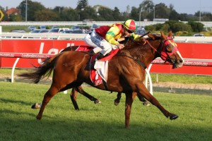 Observational, above, scores an emotional win in the Easter Cup at Caulfield. Photo by Ultimate Racing Photos.