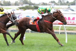 Scarlet Billows represents good value in 2016 Gai Waterhouse Classic betting markets. Photo: Ultimate Racing Photos
