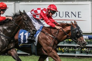 Miss Promiscuity is David Hayes' pick in the 2015 Sir John Monash Stakes. Photo: Adrienne Bicknell