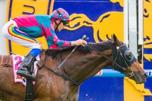Terry O'Sullivan has pleased with the form of Happy As Hell ahead of the 2014 Queensland Derby