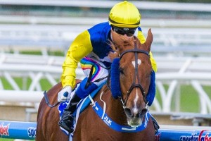 Sistine Demon will attempt a title defence of the Victoria Handicap this weekend. Photo: Race Horse Photos Australia